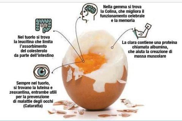 Salute benessere le uova fanno aumentare il colesterolo for Colesterolo alto cibi da evitare